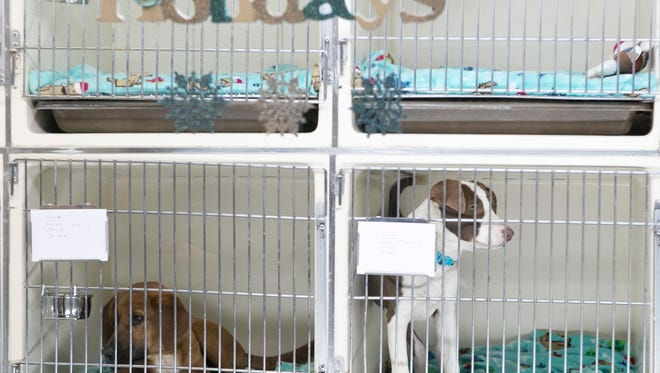 Rescue dogs for adoption at Eleventh Hour Rescue. Grand opening of Eleventh Hour RescueÕs Kennel on Black Friday in the Rockaway Mall next to Sears, Rockaway, NJ. Friday, Nov. 27, 2015.Special to NJ Press Media/Karen Mancinelli/Daily RecordMOR 1128 Eleventh Hour Opening