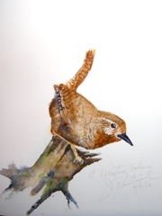 Bird watercolor by Jerry Patrick