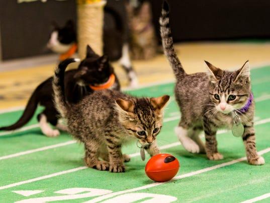 Kitten Bowl III Final Photo Assets