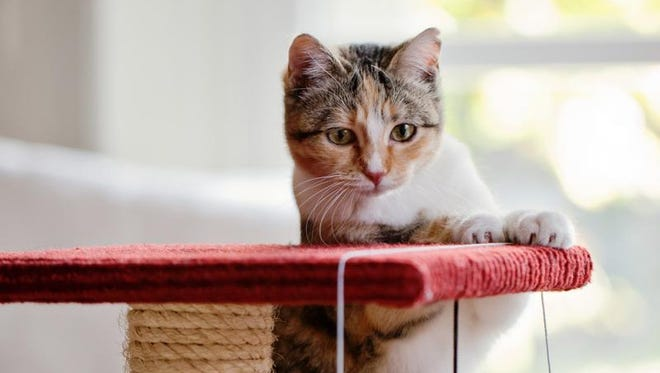 It's normal for cats to scratch. Give them something to scratch on and save your furniture. / Les Hirondelles Photography / Getty Images