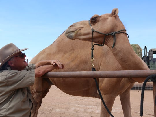 Camel Safari owner Guy Seeklus talks to Lodi, one of the farm's riding camels.