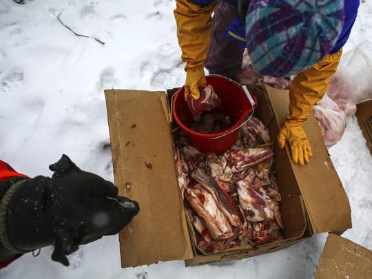 Volunteer Auston Gross gathers donated raw meat to feed the wolf dogs at Howling Timbers on Feb. 26. The wolf dogs' diet consists of a mixture of raw meat and dog food.