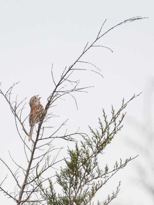 635967488963265746-birdwatching-strupp-8.jpg
