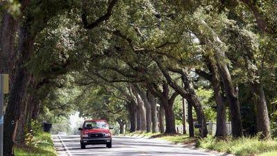 12th avenue tree tunnel