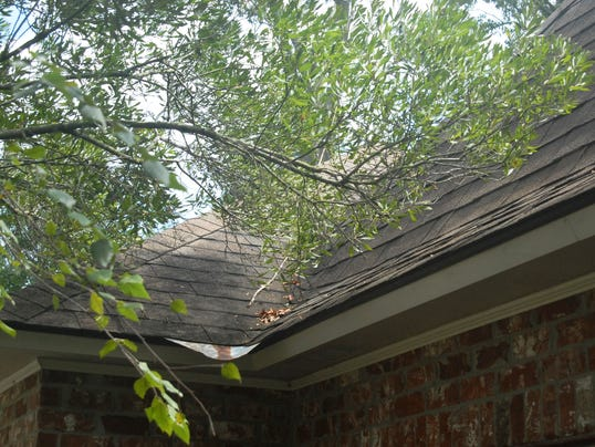 branchesonroof.jpg