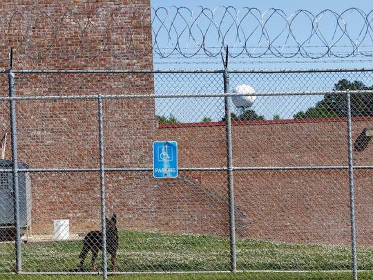 In this April 10, 2018 photograph, a guard dog roams