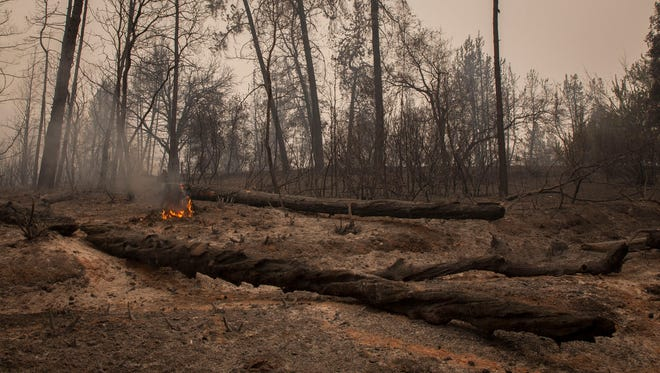 A small fire still burns among other burned out trees near Whiskeytown Lake along Highway 299 in the Whiskeytown Shasta-Trinity National Recreation Area Monday July 31, 2018 near Redding, CA. The area burned as a part of the Carr Fire, which has reached only 20 percent containment as of Monday morning. Crews head down Highway 299 near the Trinity County line where the fire is still unpredictable.