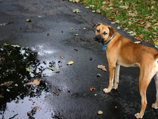 driveway-dog-1359949