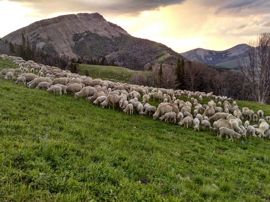 Scenic grazing shot