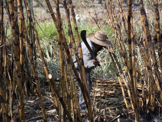 Mexico sugar output
