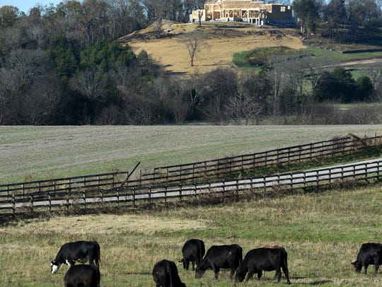 Cattle graze on a farm on West Harpeth Road while new homes are being constructed on Nov. 12, 2015.