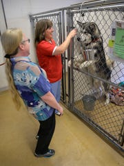 Tri-County Humane Society Executive Director Vicki Davis, left, and animal care technician Laura Lund give a little attention to Zeus, a 1-year-old malamute up for adoption at the shelter.