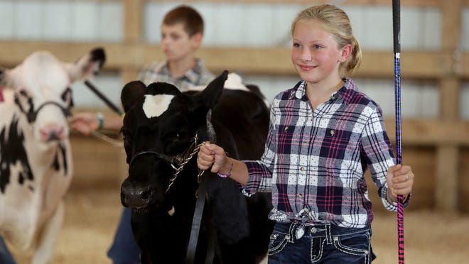 Reinna Hill, 10, with the Krazy Kritters 4-H Club, shows her dairy feeder Tuesday in the showmanship intermediate class at the Stark County Junior Fair. Hill, a Tuslaw Middle School fifth-grader, brought two dairy feeders and a hog to the fair.