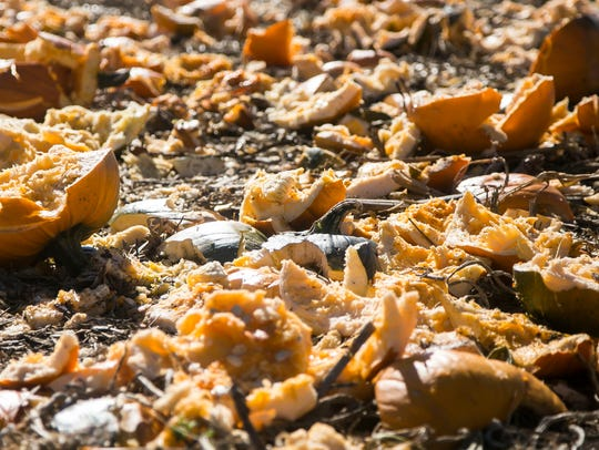 Bits and pieces of smashed pumpkins sit on the ground