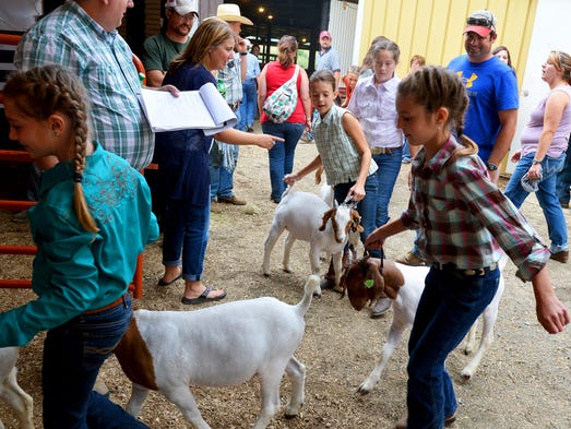 Elyse Dyson, 10, holds onto her goat as she follows others towards the ring to compete in the junior goat showmanship competition at the Augusta County Fair on Friday, August 8, 2014.