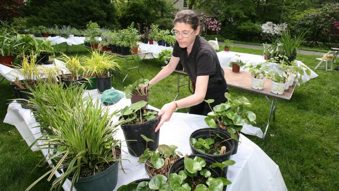 Margot Lee, a member of the Garden Club of Nyack, sets up plants at the 2012 sale.