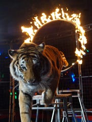 A tiger leaps through a ring of fire at the Barak Shrine