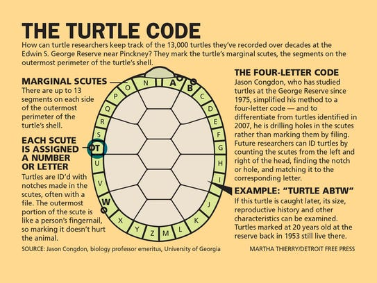 The turtle code