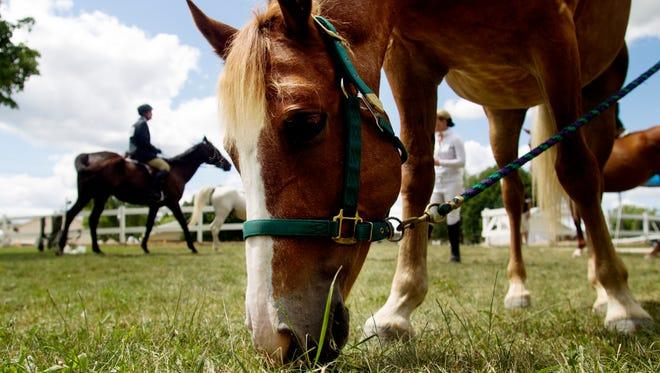 An equestrian horse grazes at the Ozaukee County Fair in Cedarburg. This year's fair runs through Sunday.