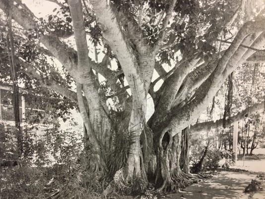 636441003880502980-Tree.jpg