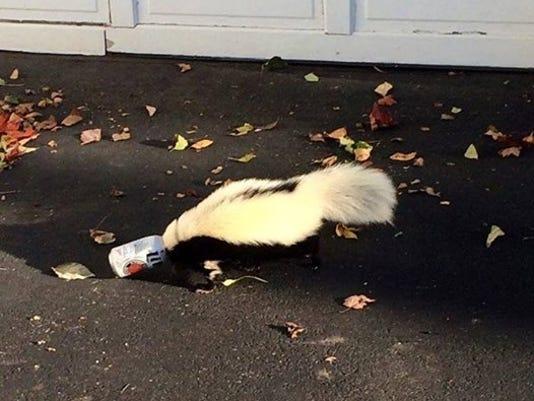 drunk skunk