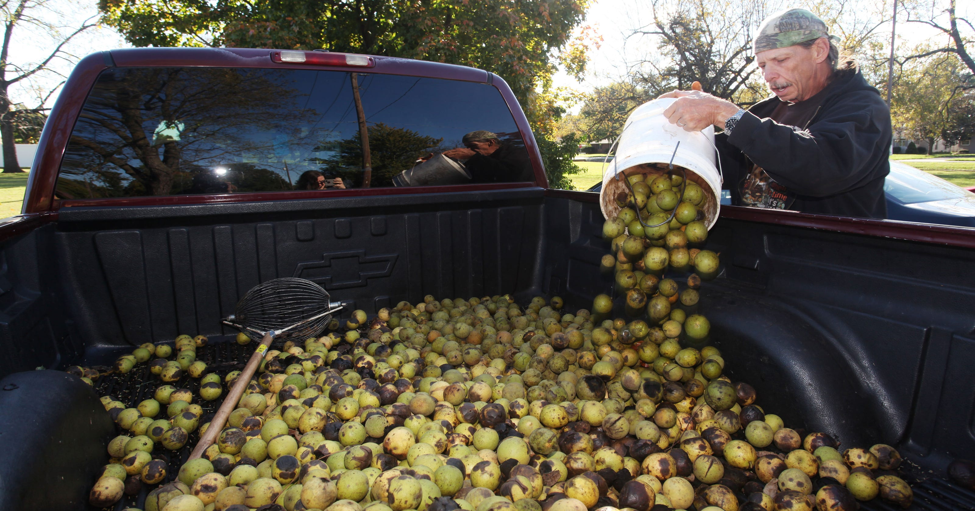 Here's how much black walnuts will be worth this fall
