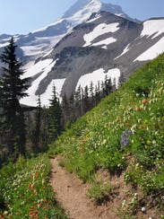 Timberline Trail - wildflowers and Mt. Hood from Elk Cove