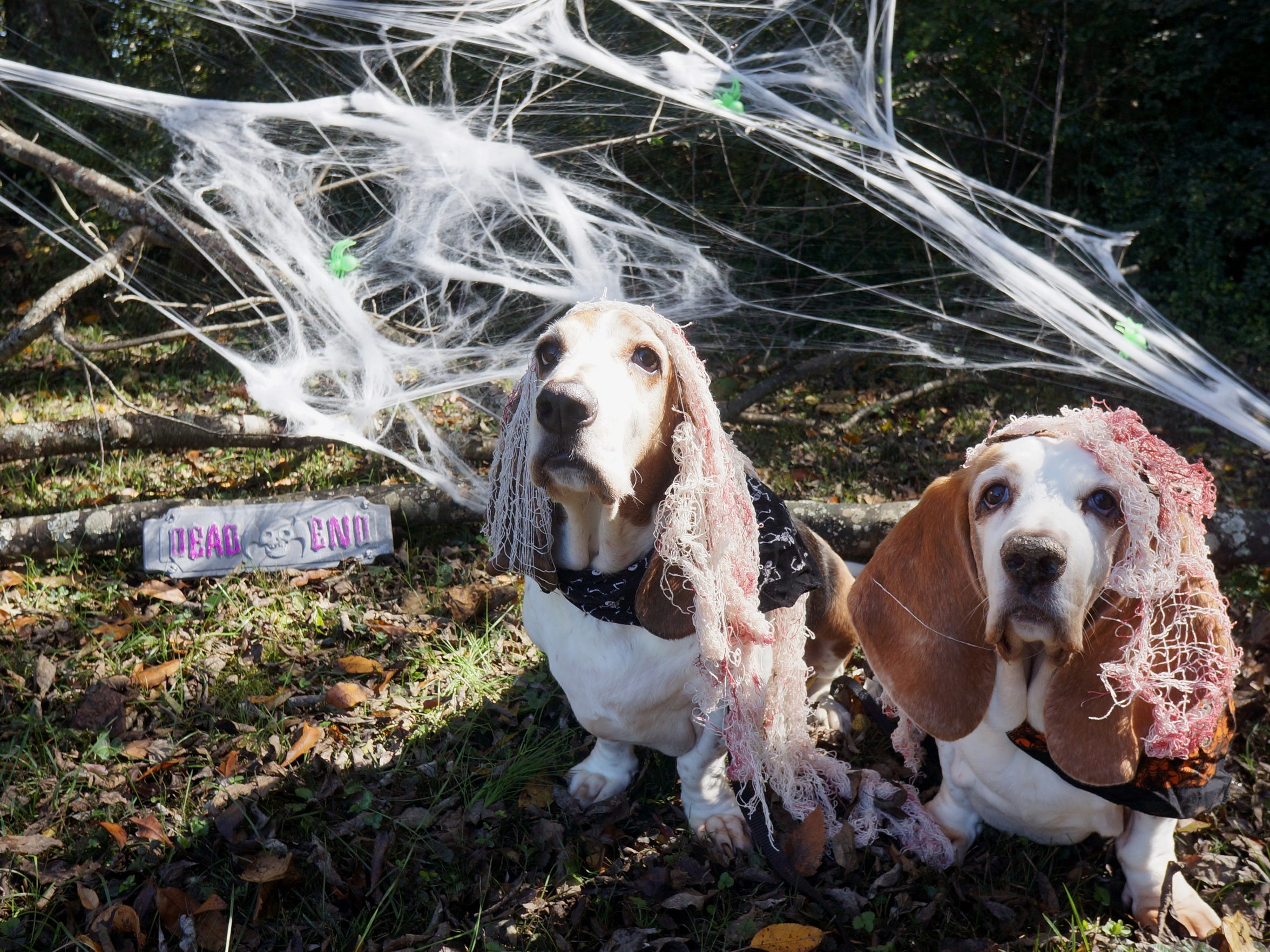 Doll up your dogs and bring them to the annual Youth Empowerment through Arts and Humanities Zombie Walk on Saturday.