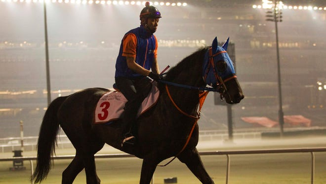 A jockey rides Japan's Belshazzar during the morning workout in Dubai on Friday ahead of Saturday's $10 million Dubai World Cup, the world's richest horse race.