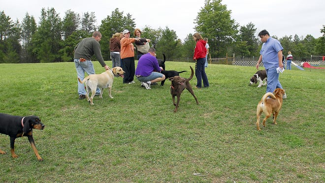 Dogs and their owners visit at Rome's Room to Roam Dog Park.