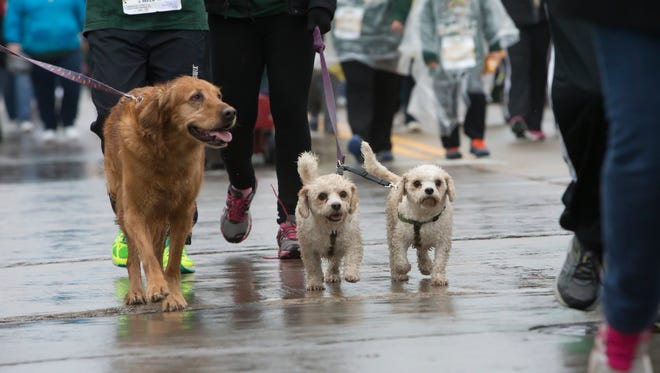 Numerous pets were included on the two-mile walk of the Festival Food Turkey Trot Thanksgiving Day, Nov. 26, 2015.