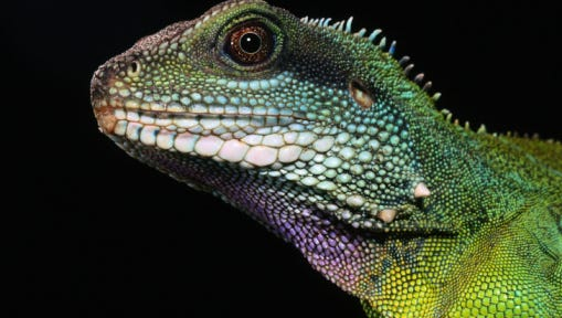 Reptiles to be featured at Waukesha event