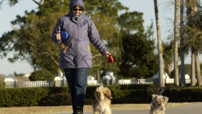 Jeannette Littrell walks dogs Chewie (left) and Poochie along Murrell Road in Viera during a February 2009 cold snap.