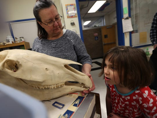 Instructor at Bergen Community College, Daneen Aromando shows 7-year-old Sophie Meseck a horse skull during the 36th annual Chester Schools Science Fair held at the Black River Middle School. March 56, 2016. Chester, N.J.