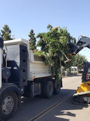 Tulare County detective held a large-scale marijuana