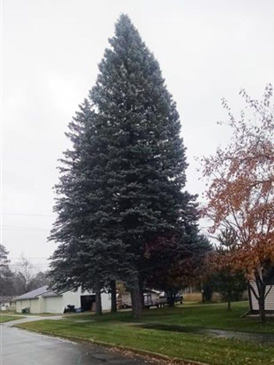 State-christmas-tree.jpg