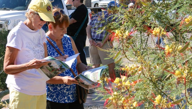 Area gardeners refer to their complementary copies of The Garden Guide during the Spring Stroll to identify the Yellow Bird of Paradise (Caesalpinia gilliesii) in the Demonstration Garden.