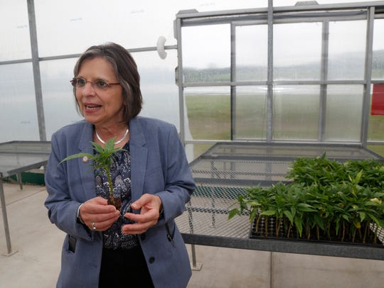 New York State Assemblywoman Donna Lupardo speaks about industrial hemp during the announcement of a new industrial hemp farm at Nanticoke Gardens in Endicott.