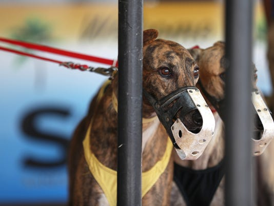 636621699660254156-Greyhounds.jpg