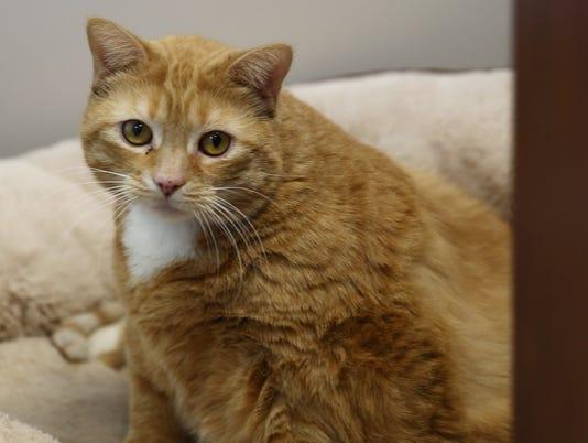 DCSCPCA Pet of the Week - Bertha