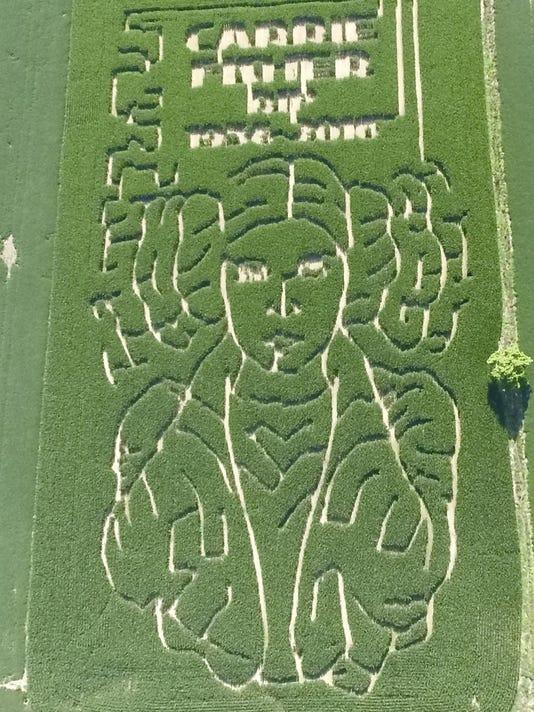 Princess Leia Corn Maze