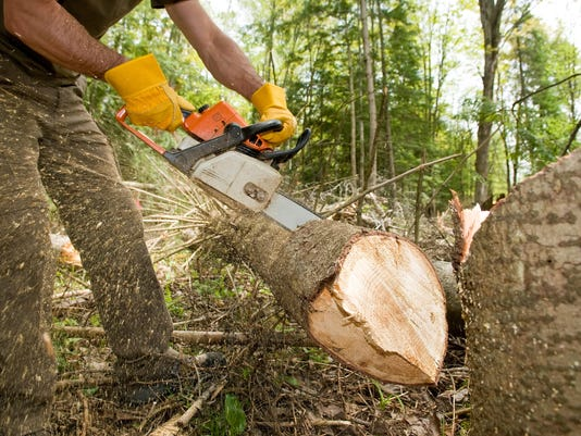 Logger slicing tree with chainsaw