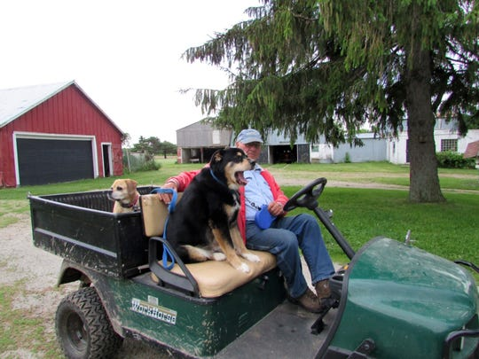 Bob Manzke takes Sunny and Jade for a ride instead of a walk.