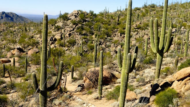 The Tortolita Mountains border the northwest edge of the Tucson valley near the towns of Marana and Oro Valley.