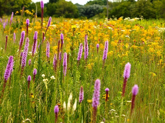 The Gottfried Prairie and Arboretum, located at University of Wisconsin - Fond du Lac, is an example of creating sustainable ecosystems in the city. Gannett Wisconsin file photo