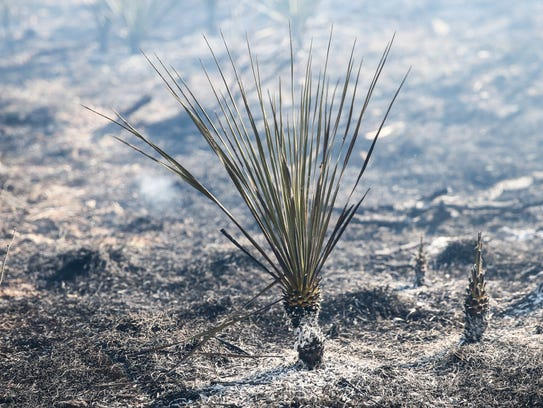 A prescribed fire blazes through 950 acres Tuesday,