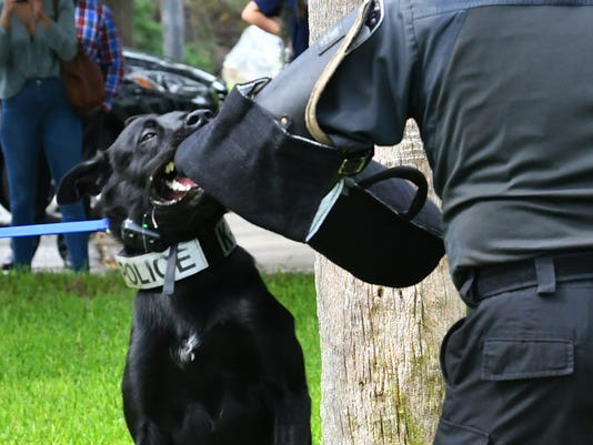 Two new dogs for Titusville K-9 unit