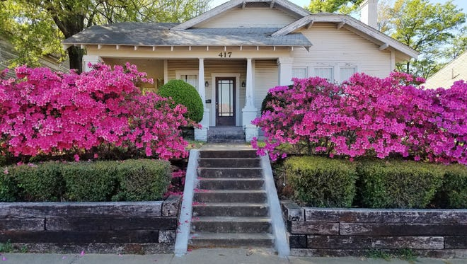 The Azalea and Spring Flower Trail in Tyler, which showcases many species of bedding plants and draws thousands of flower enthusiasts, is still days from beginning, but many plant blooms are peaking or peaked weeks ago due to early spring conditions.