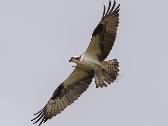 News: Osprey