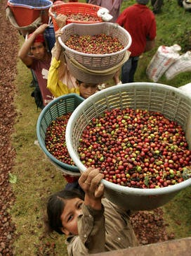 "In this Nov. 14, 2007 file photo, Nicaraguan workers wait in line to measure their coffee beans on a plantation on the slopes of the Poas Volcano, northwest of the capital of San Jose, Costa Rica. Global warming makes feeding the world harder and more expensive, a United Nations scientific panel said.  A warmer world will push food prices higher, trigger ""hotspots of hunger"" among the world's poorest people, and put the crunch on Western delights like fine wine and robust coffee, the Intergovernmental Panel on Climate Change concluded in a 32-volume report issued Monday, March 31, 2014."